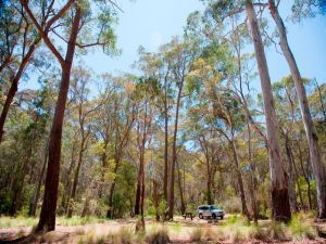 Coolah Tops National Park Camping - QLD Tourism