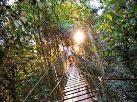 O'Reilly's Rainforest Retreat - QLD Tourism