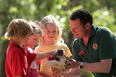 Cleland Wildlife Park - QLD Tourism