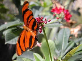 Butterfly Farm - QLD Tourism