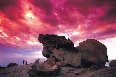 Kangaroo Island Adventure Tour 2 day/1 night - QLD Tourism