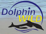 Dolphin Wild - QLD Tourism