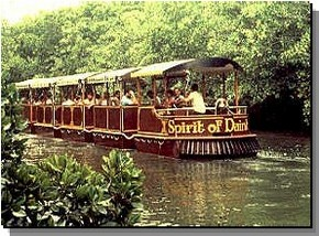 Daintree Rainforest River Trains - QLD Tourism