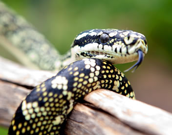 Reptile Encounters - QLD Tourism