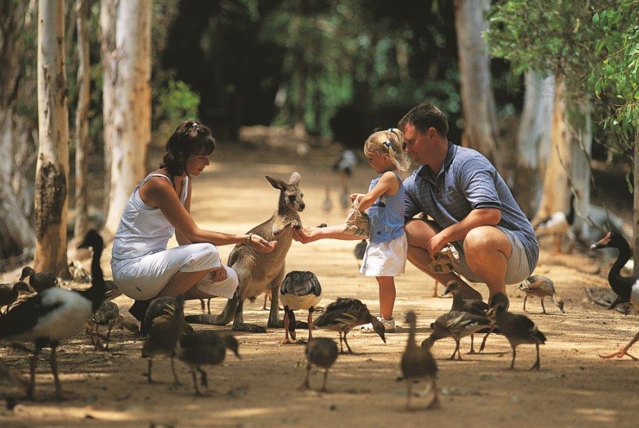Billabong Sanctuary - QLD Tourism