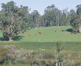 Scenic Drives - Bunbury Collie Donnybrook - QLD Tourism