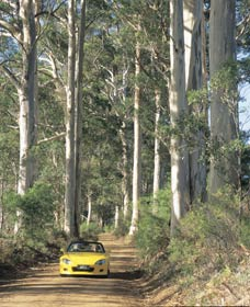 Mount Shadforth Scenic Drive - QLD Tourism