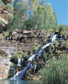 Fortescue Falls - QLD Tourism