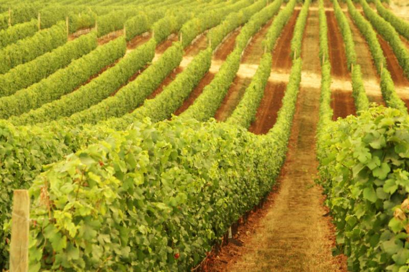 Xanadu Wines - QLD Tourism