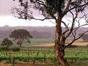 Yangarra Estate Vineyard - QLD Tourism