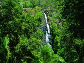 Kondalilla National Park - QLD Tourism