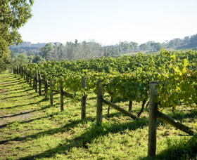 Surveyor's Hill Vineyards - QLD Tourism