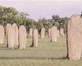 Magnetic Termite Mounds - QLD Tourism