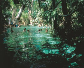 Mataranka Thermal Pool - QLD Tourism