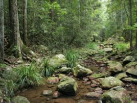 Amamoor State Forest - QLD Tourism