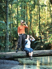 Birdwatching on the Fraser Coast - QLD Tourism