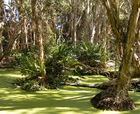 Arkarra Lagoons and Tea Gardens - QLD Tourism