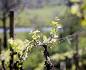 Norton Estate Wines - QLD Tourism