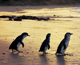 Phillip Island Nature Park - QLD Tourism