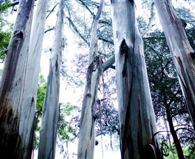 Dandenong Ranges National Park - QLD Tourism