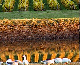 Pipers Brook Vineyard - QLD Tourism