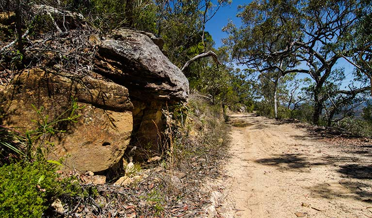 Canoelands Ridge walking track