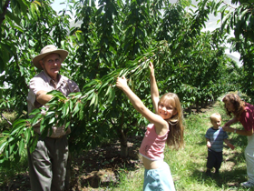 Forest Range Cherries - QLD Tourism