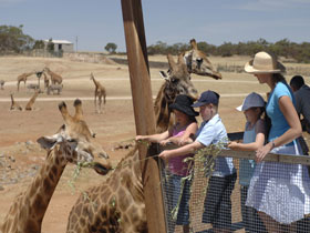 Monarto Open Range Zoo - QLD Tourism