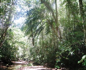 Mount Lewis National Park - QLD Tourism