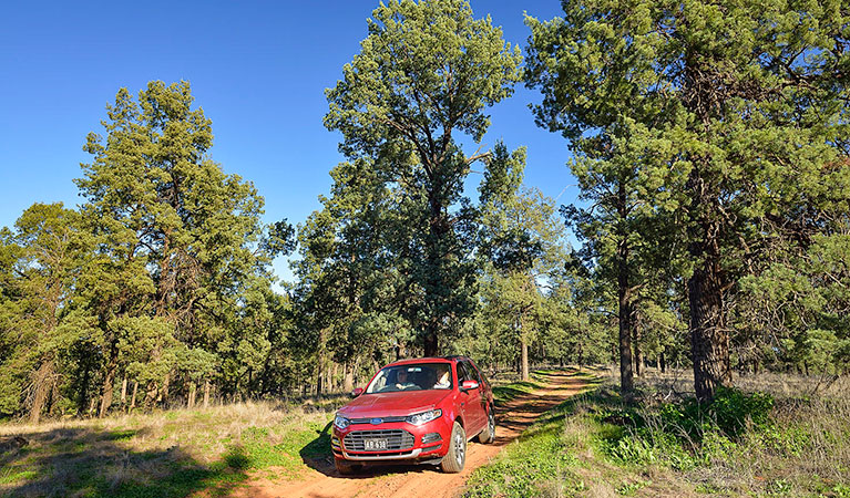 Forest drive - QLD Tourism