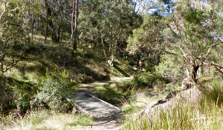 Wollomombi walking track - QLD Tourism