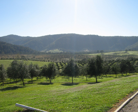 Hastings Valley Olives - QLD Tourism
