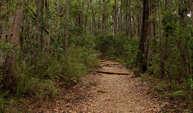 Pigeon House Mountain Didthul walking track - QLD Tourism