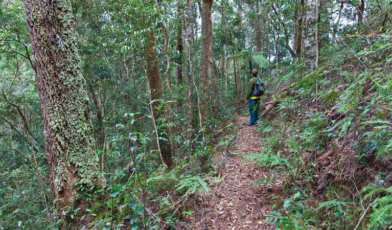 Blackbutt walking track - QLD Tourism