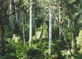 Lind National Park