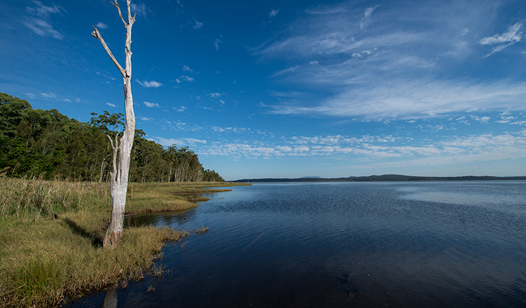 Lake Innes Nature Reserve - QLD Tourism