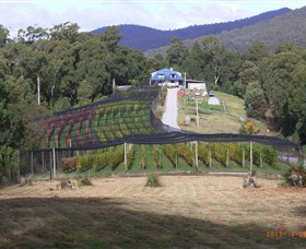 Motton Terraces - QLD Tourism