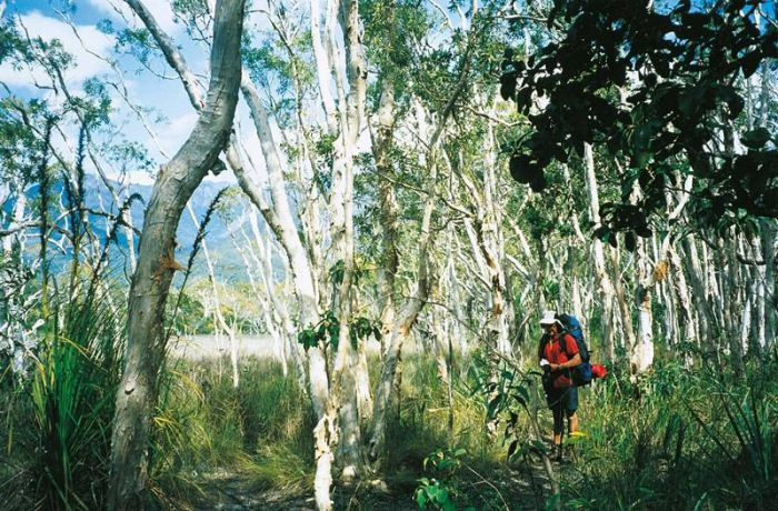 Thorsborne Trail Hinchinbrook Island National Park - QLD Tourism