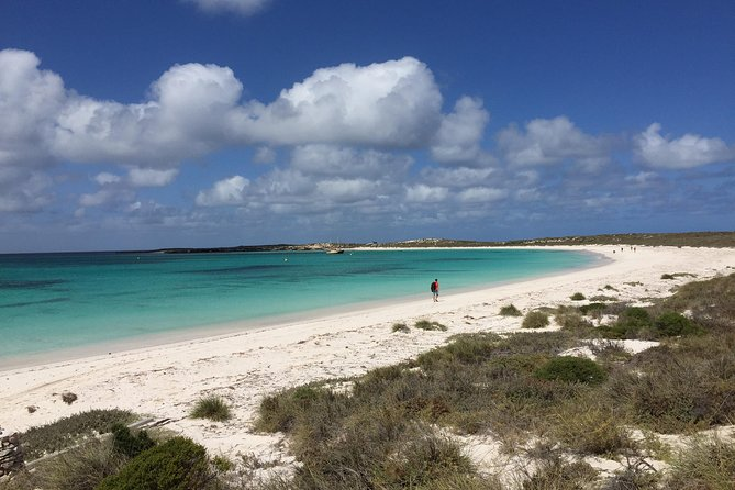 Abrolhos Island Half Day Fly and Flipper - QLD Tourism