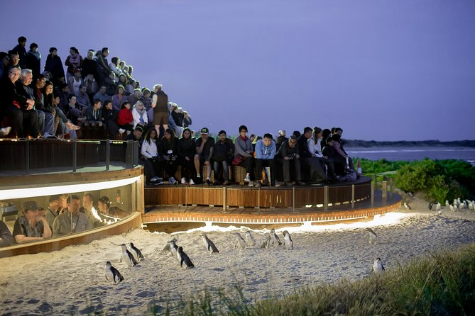 1 Day Private Phillip Island Tour VIP Charter up to 9 People - QLD Tourism