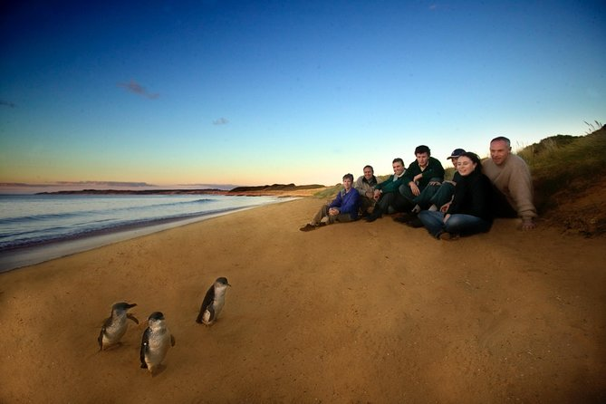 Phillip Island Ultimate Penguin Eco Tour or Skybox Experience - QLD Tourism