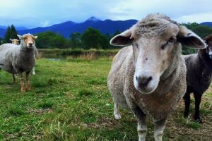 Trevena Glen Farm Animal Experience - QLD Tourism
