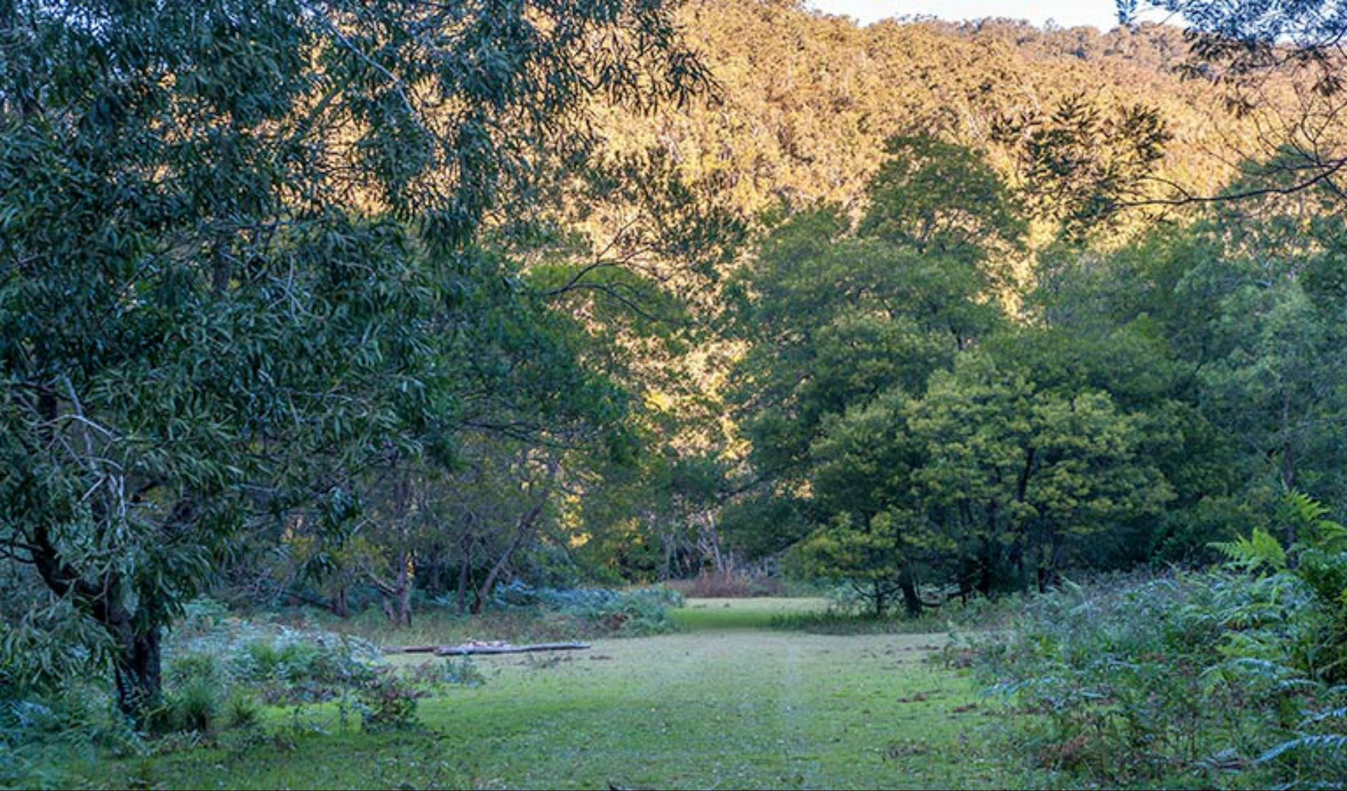 Griffins walking track - QLD Tourism
