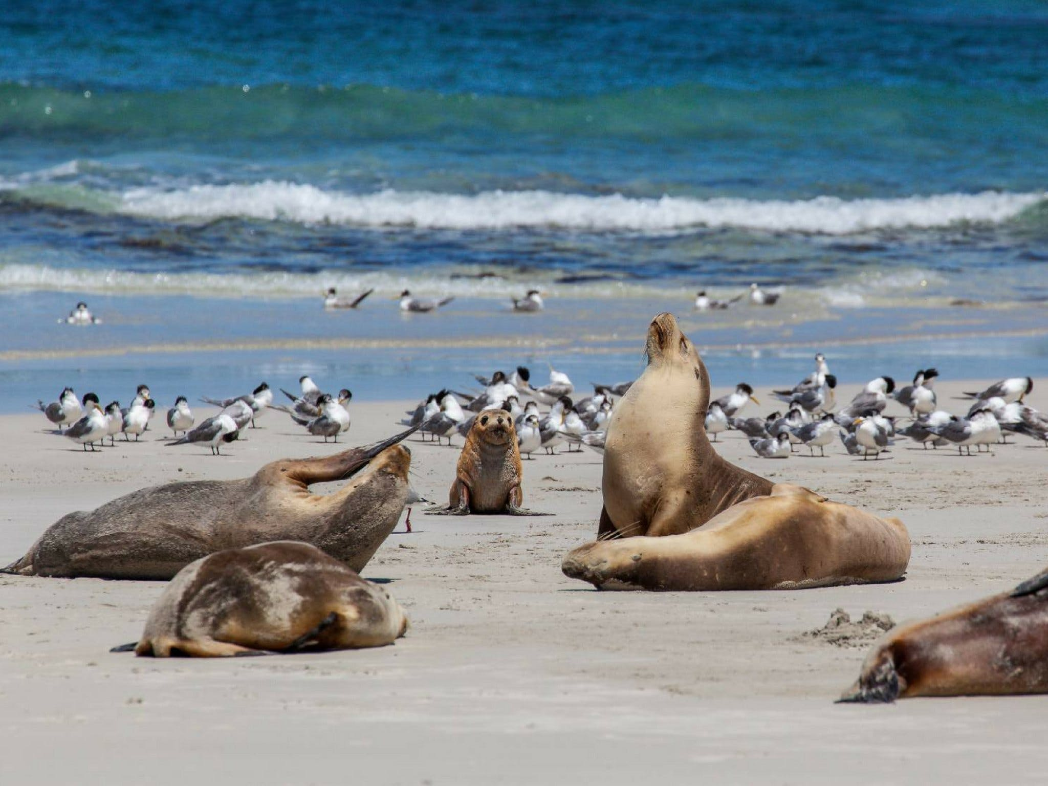 Seal Bay - QLD Tourism