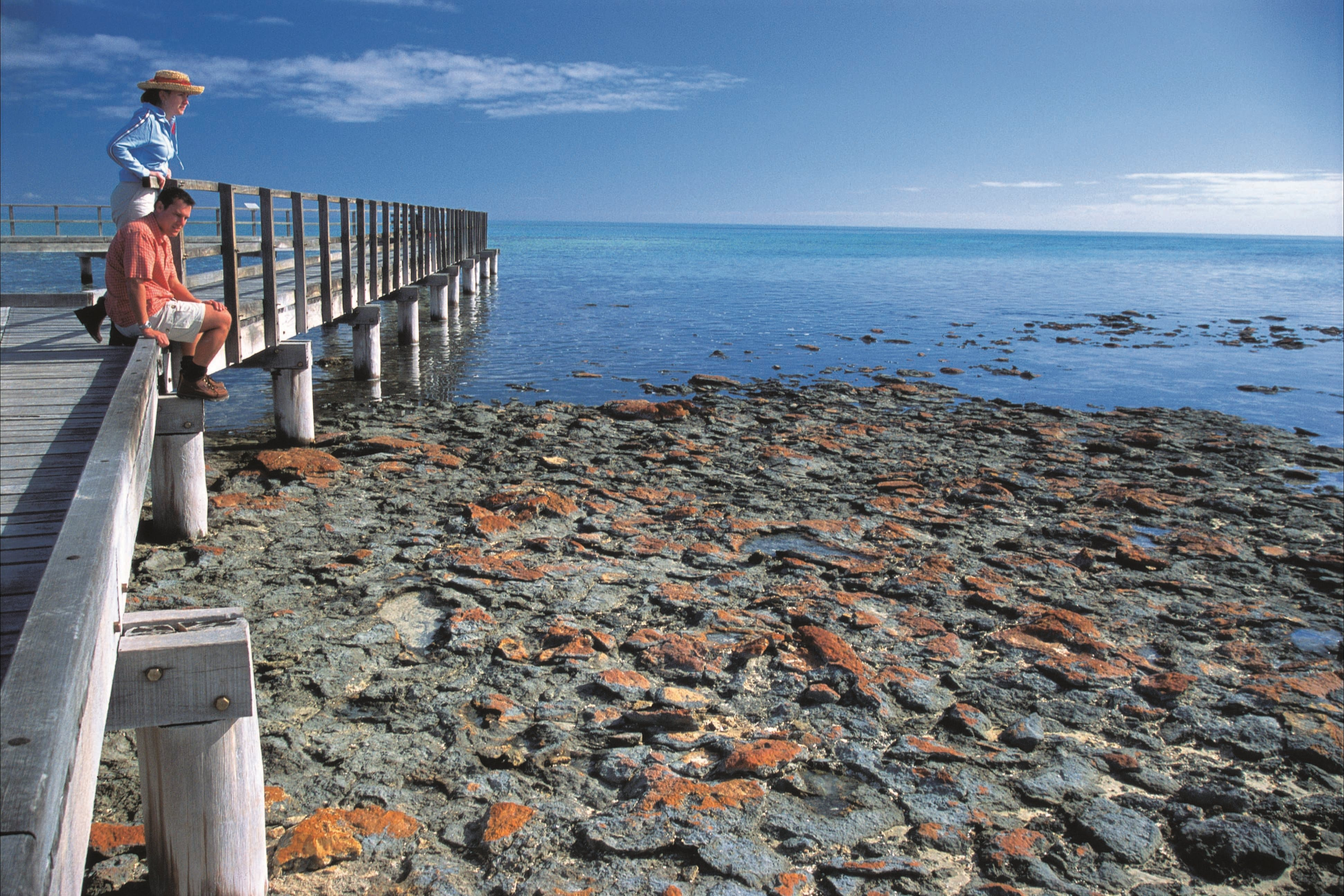 Hamelin Pool Stromatolites - QLD Tourism