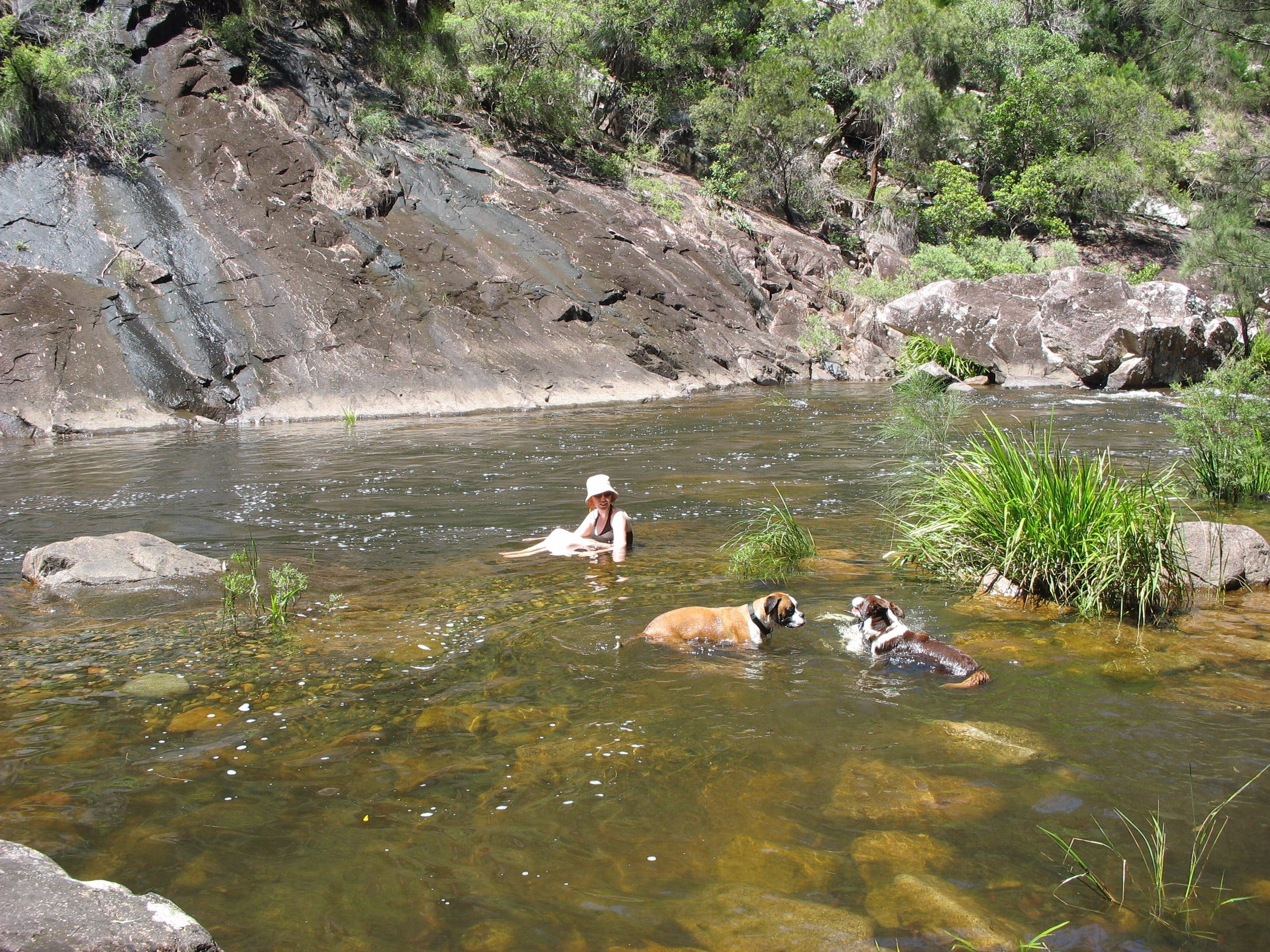 Mount Boss State Forest - QLD Tourism