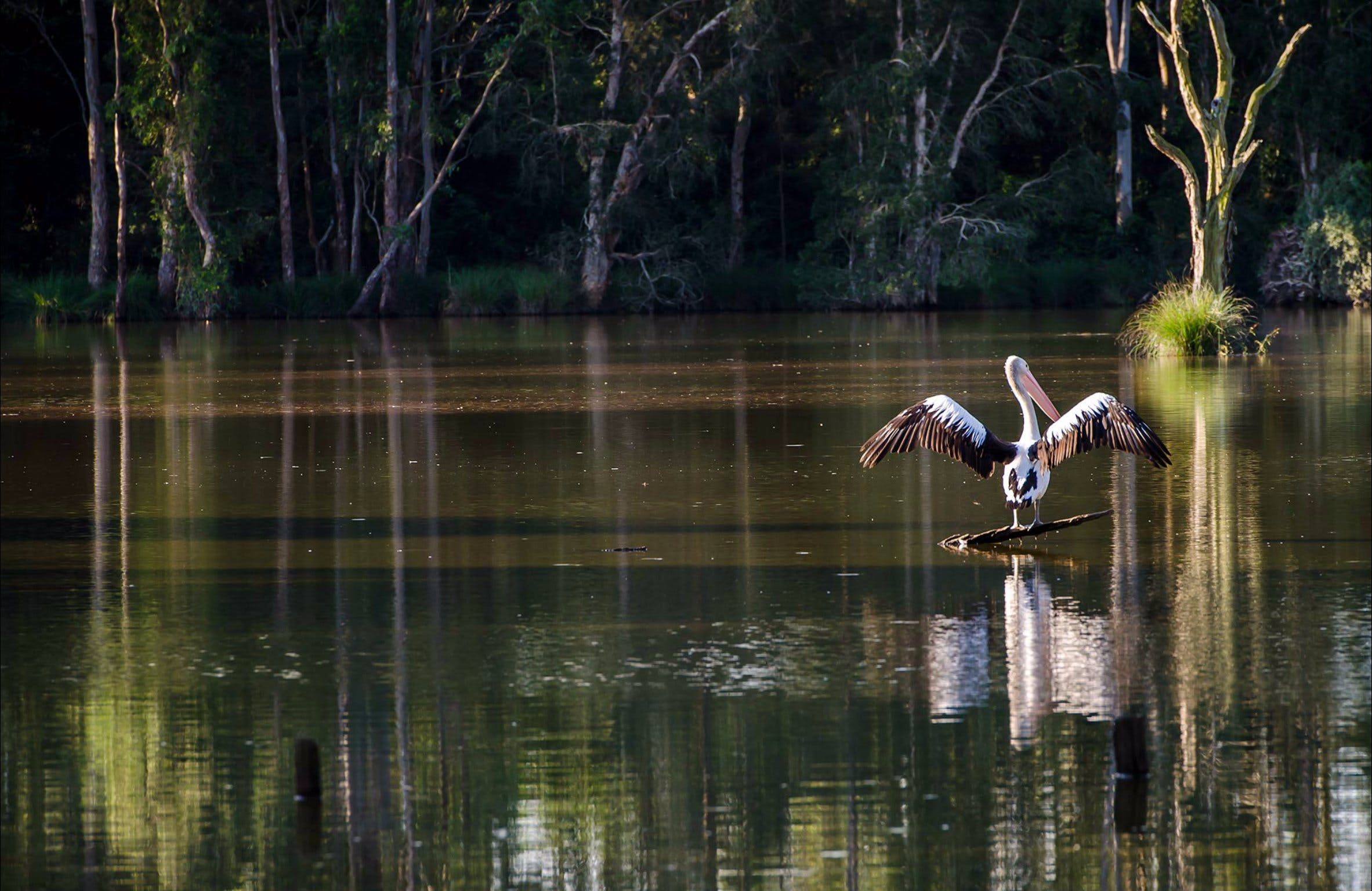 Seaham Swamp Nature Reserve - QLD Tourism