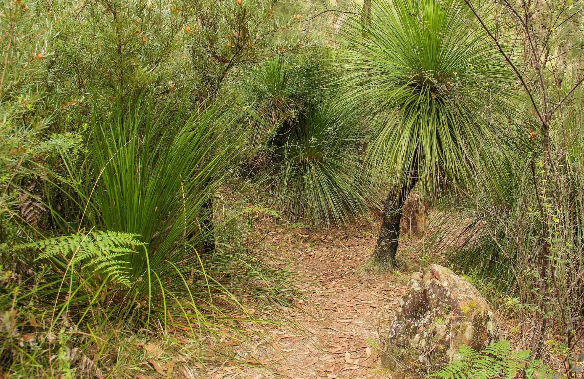 Grass Tree Circuit - QLD Tourism