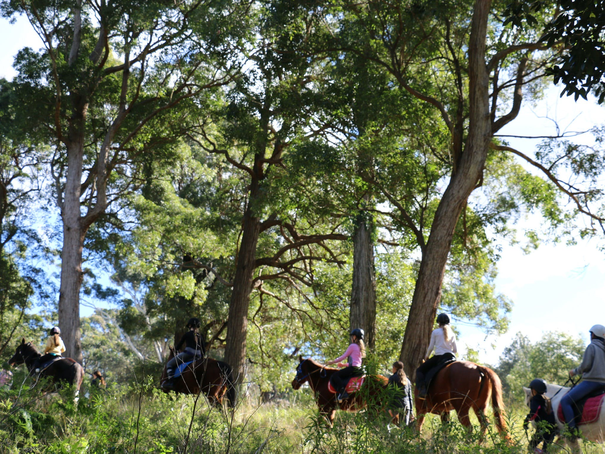 The Outlook Riding Academy - QLD Tourism