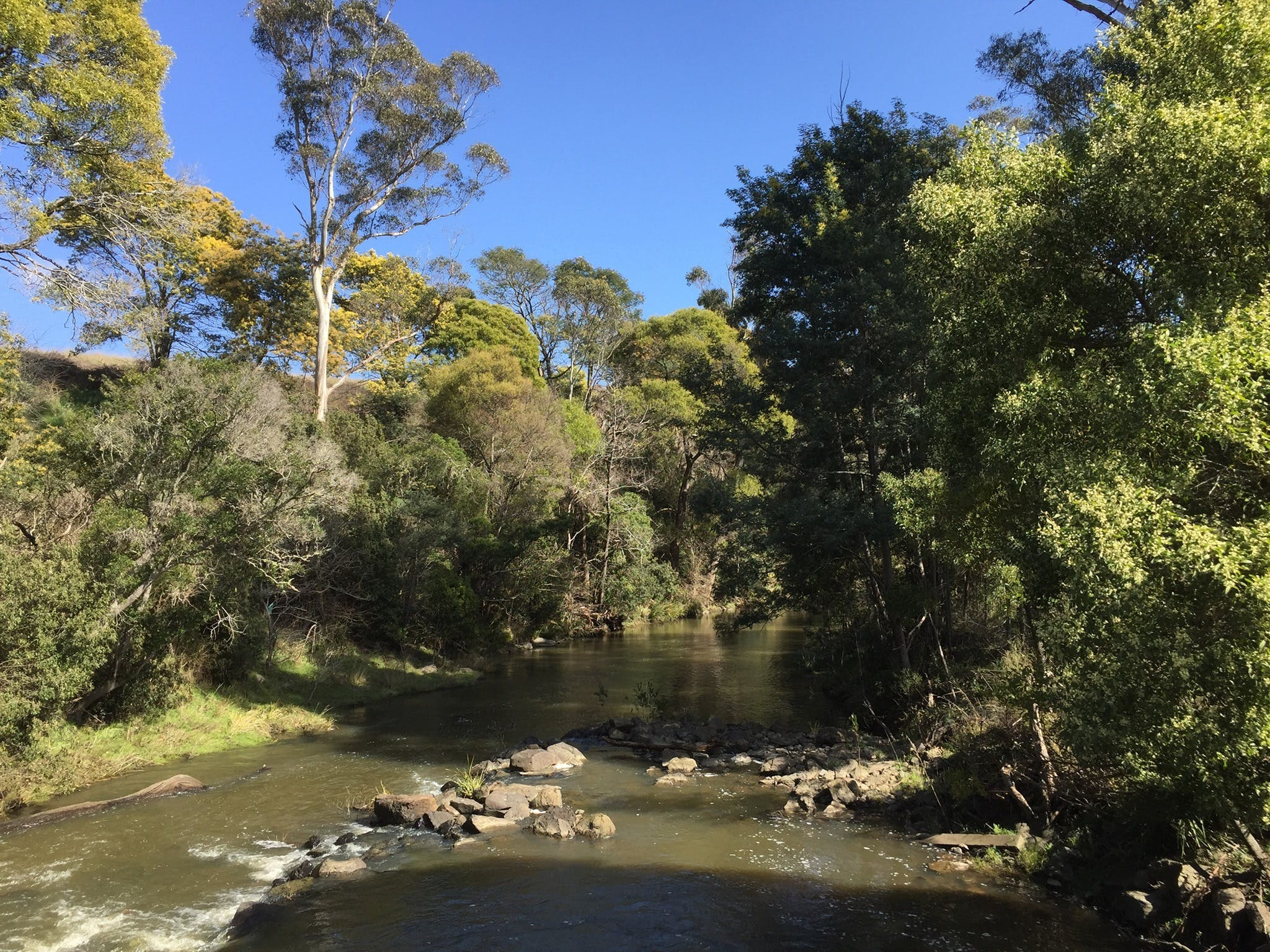 Pipers River Board Walk - QLD Tourism